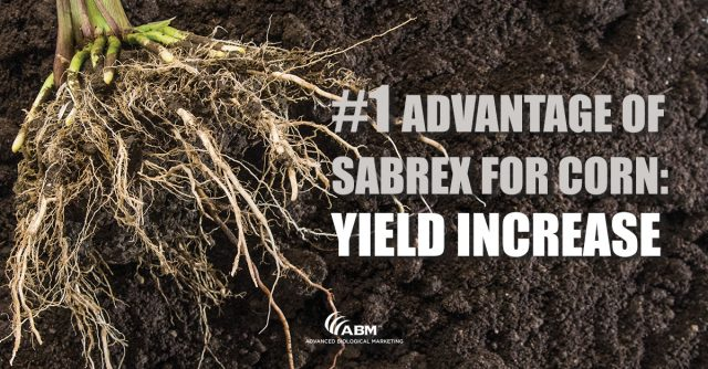 SabrEx for Corn: Giving You Greater ROI