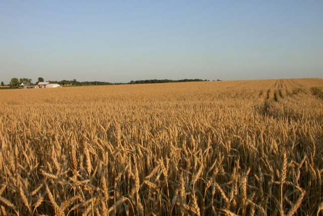 ABM Wheat & Cereals Takes Customers' Yields to the Top