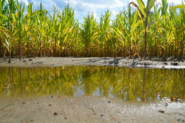 Inoculation May Be Key After Adverse Weather